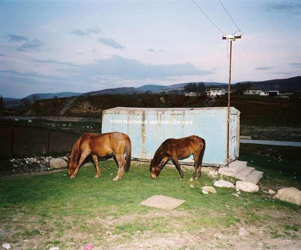 rh100417_sp6002_horses